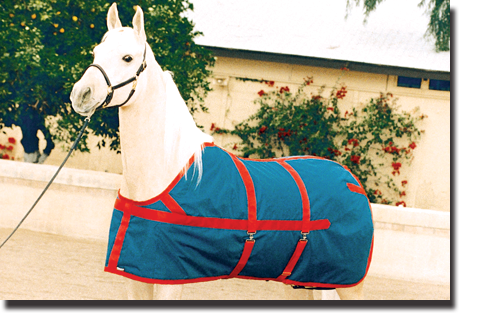 Navy & Red Equi-Lite Blanket with Closed Front