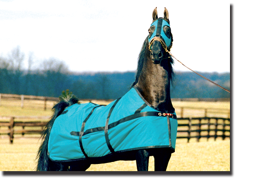 Teal & Black Equi-Lite Blanket with Closed Front and Scotch Hood