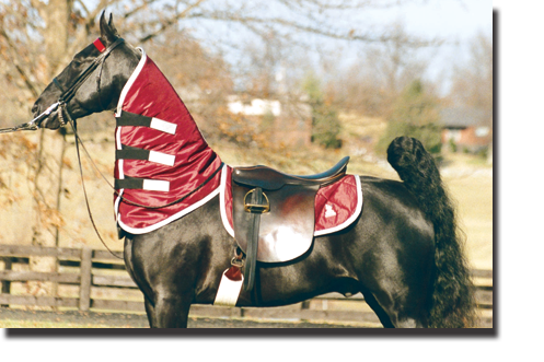 Burgundy & Silver 3/4 Neck Sweat and Matching Saddle Pad